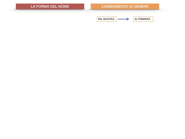 7.1.GRAMMATICA_NOMI_FORMA_GENERE_SIMULAZIONE.081