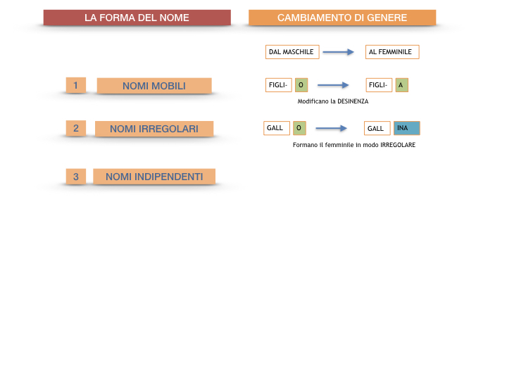7.1.GRAMMATICA_NOMI_FORMA_GENERE_SIMULAZIONE.088