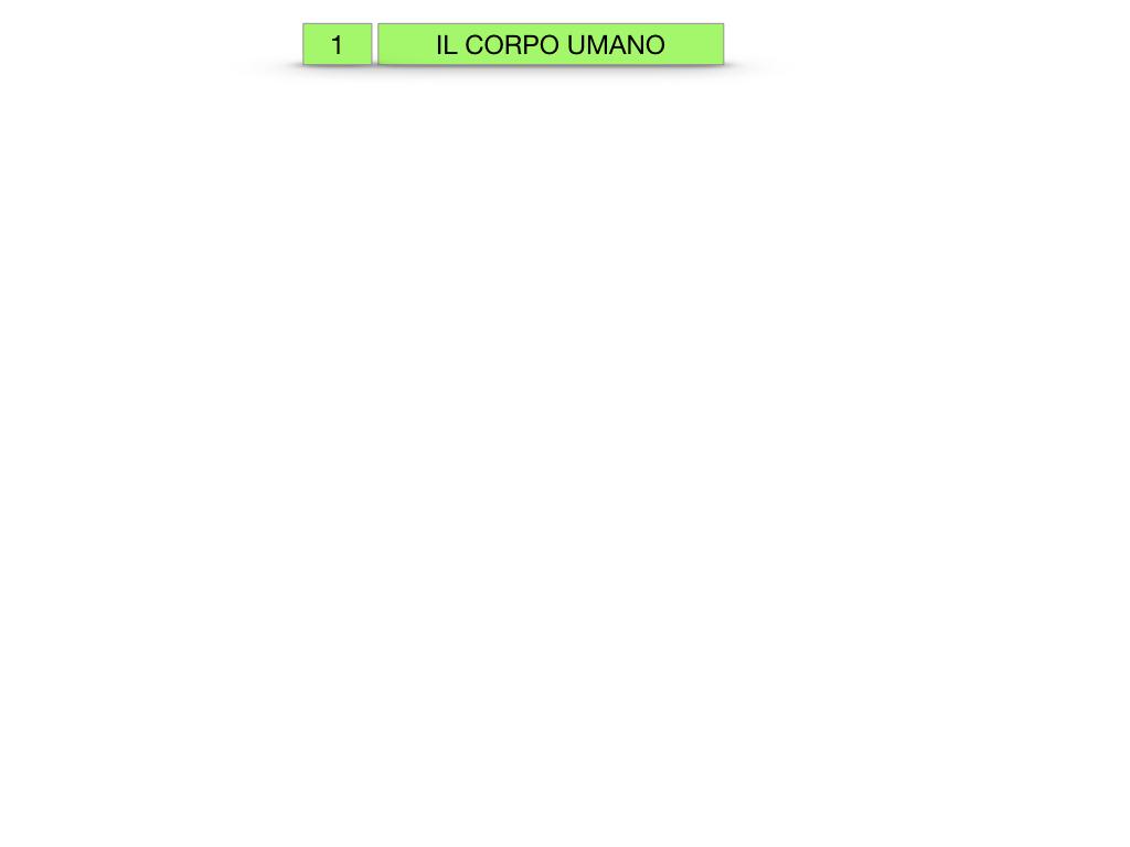 1.SCIENZE_IL CORPO UMANO_SIMULAZIONE.001