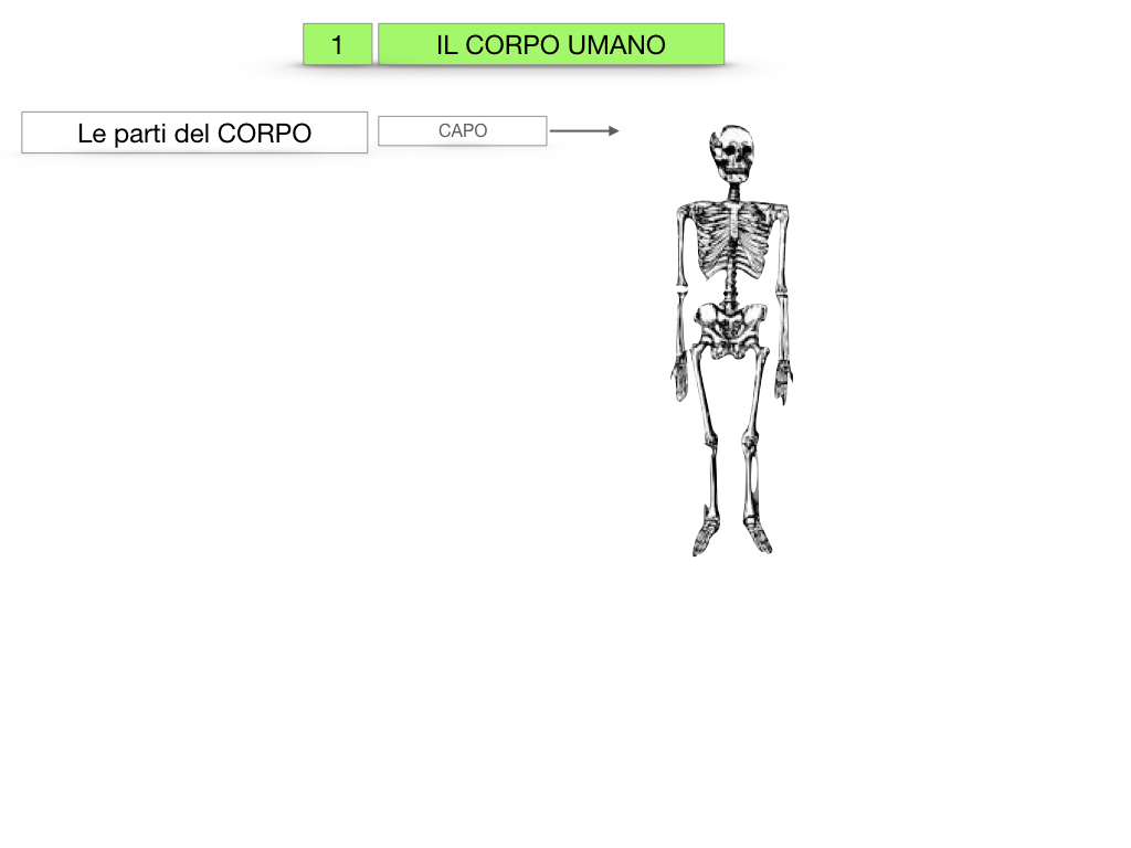 1.SCIENZE_IL CORPO UMANO_SIMULAZIONE.003