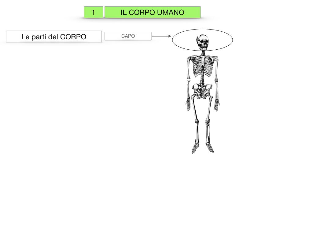 1.SCIENZE_IL CORPO UMANO_SIMULAZIONE.004