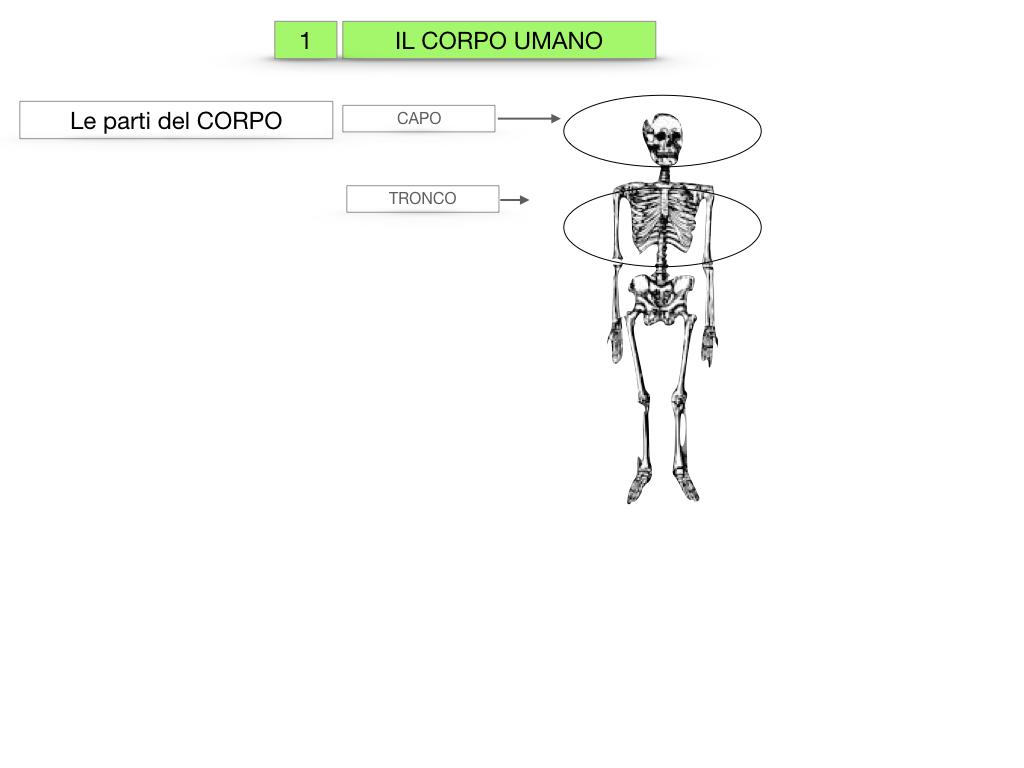 1.SCIENZE_IL CORPO UMANO_SIMULAZIONE.005