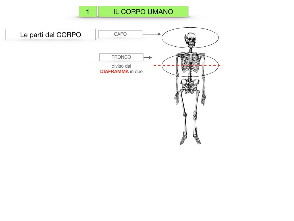 1.SCIENZE_IL CORPO UMANO_SIMULAZIONE.006