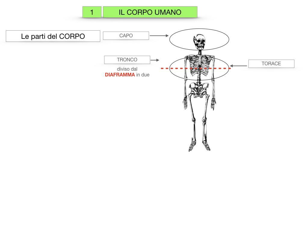 1.SCIENZE_IL CORPO UMANO_SIMULAZIONE.007