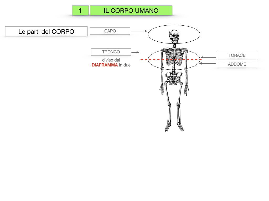 1.SCIENZE_IL CORPO UMANO_SIMULAZIONE.008