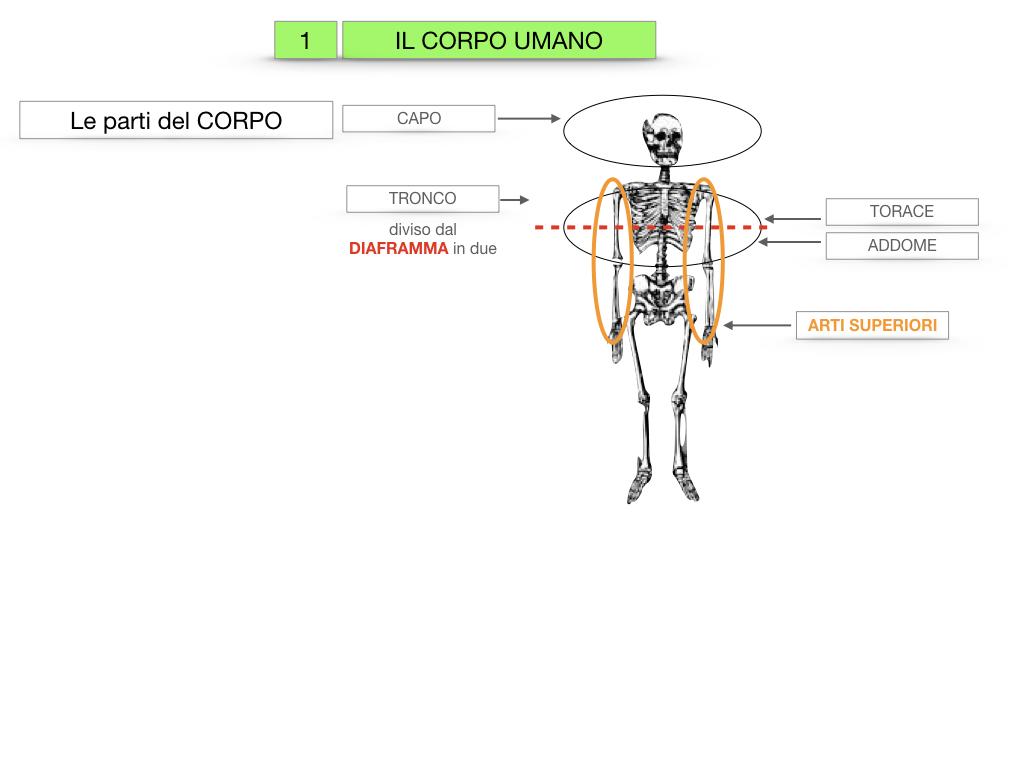 1.SCIENZE_IL CORPO UMANO_SIMULAZIONE.009