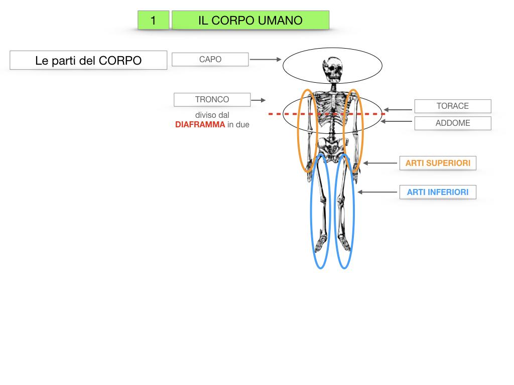 1.SCIENZE_IL CORPO UMANO_SIMULAZIONE.010