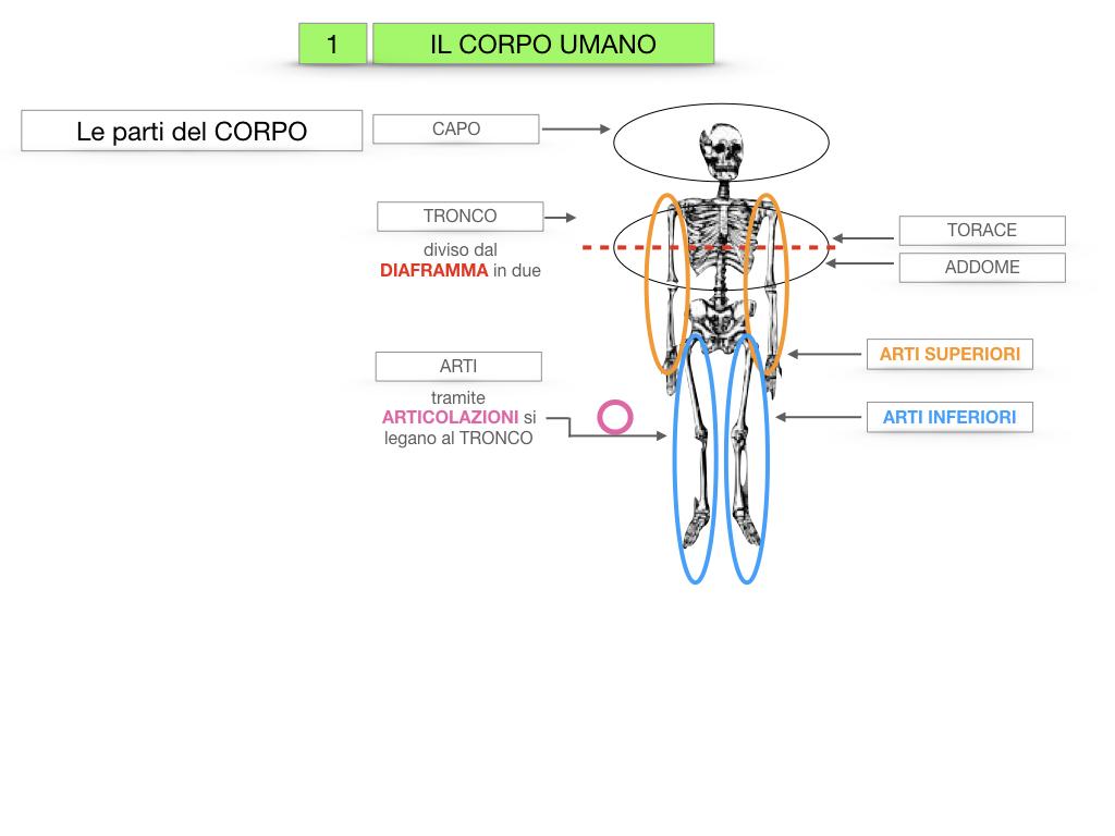 1.SCIENZE_IL CORPO UMANO_SIMULAZIONE.012