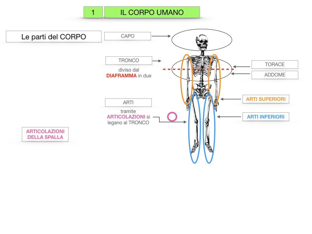 1.SCIENZE_IL CORPO UMANO_SIMULAZIONE.013