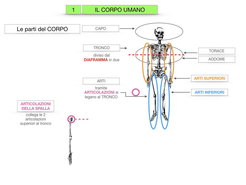 1.SCIENZE_IL CORPO UMANO_SIMULAZIONE.014
