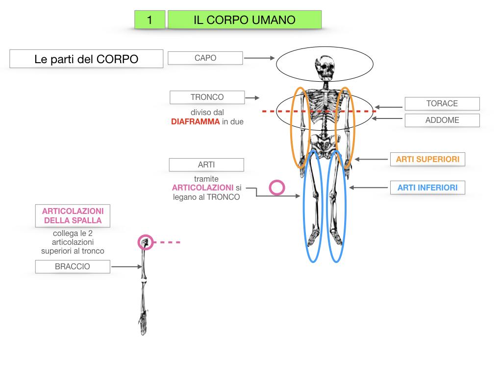 1.SCIENZE_IL CORPO UMANO_SIMULAZIONE.015
