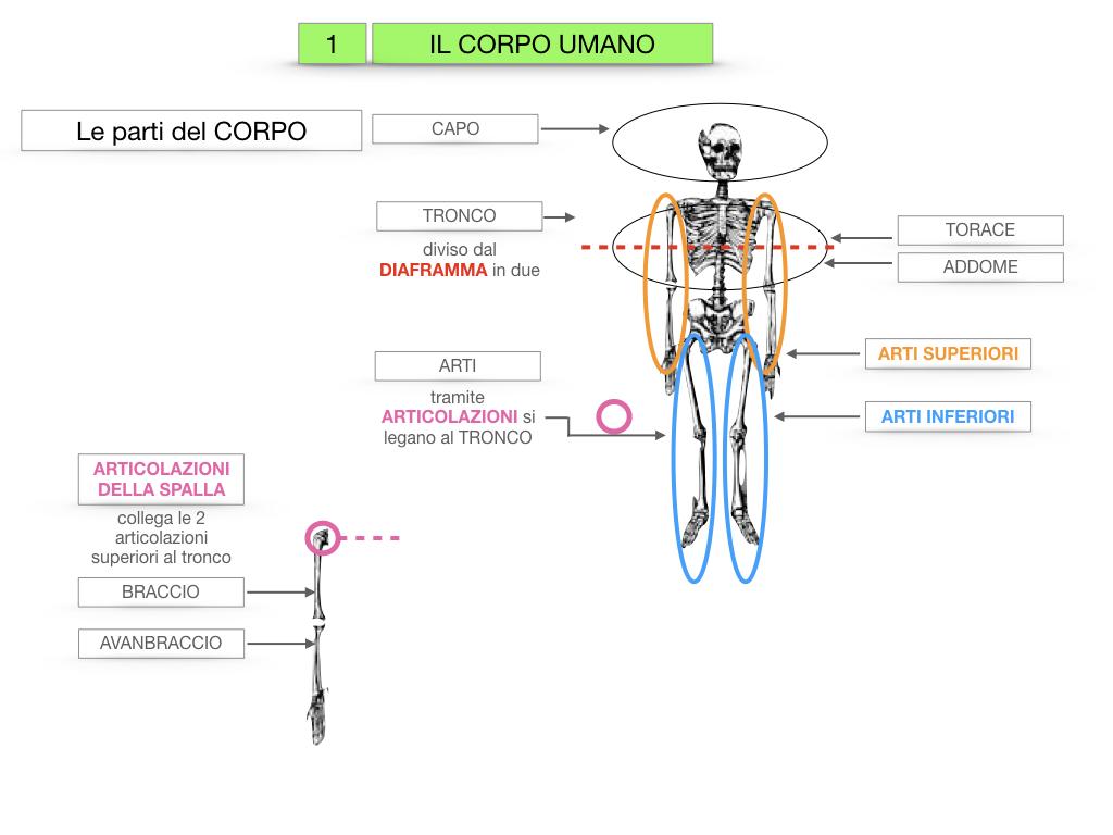 1.SCIENZE_IL CORPO UMANO_SIMULAZIONE.016