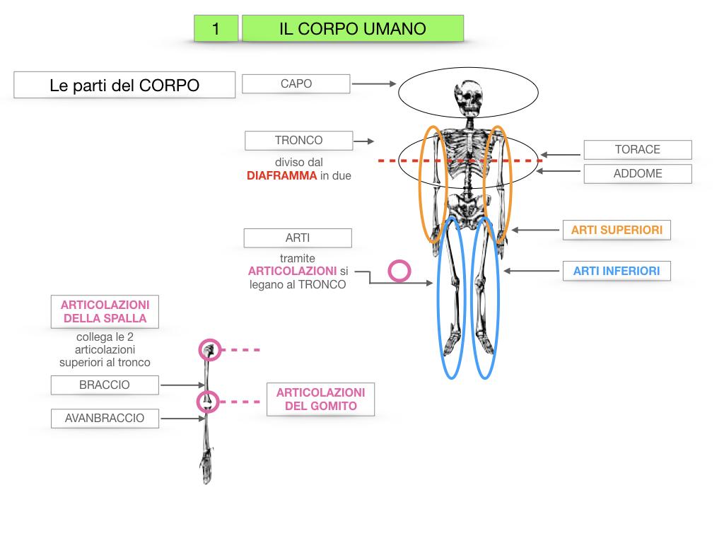 1.SCIENZE_IL CORPO UMANO_SIMULAZIONE.017