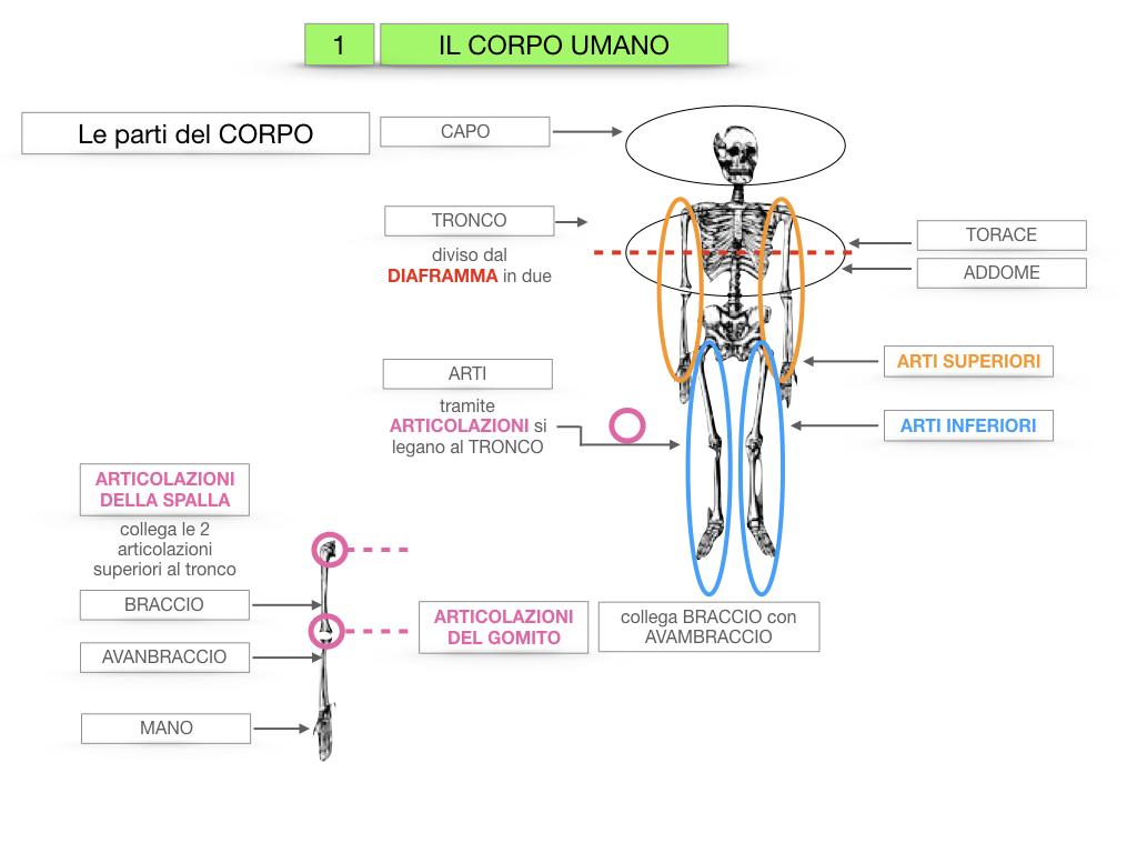1.SCIENZE_IL CORPO UMANO_SIMULAZIONE.019
