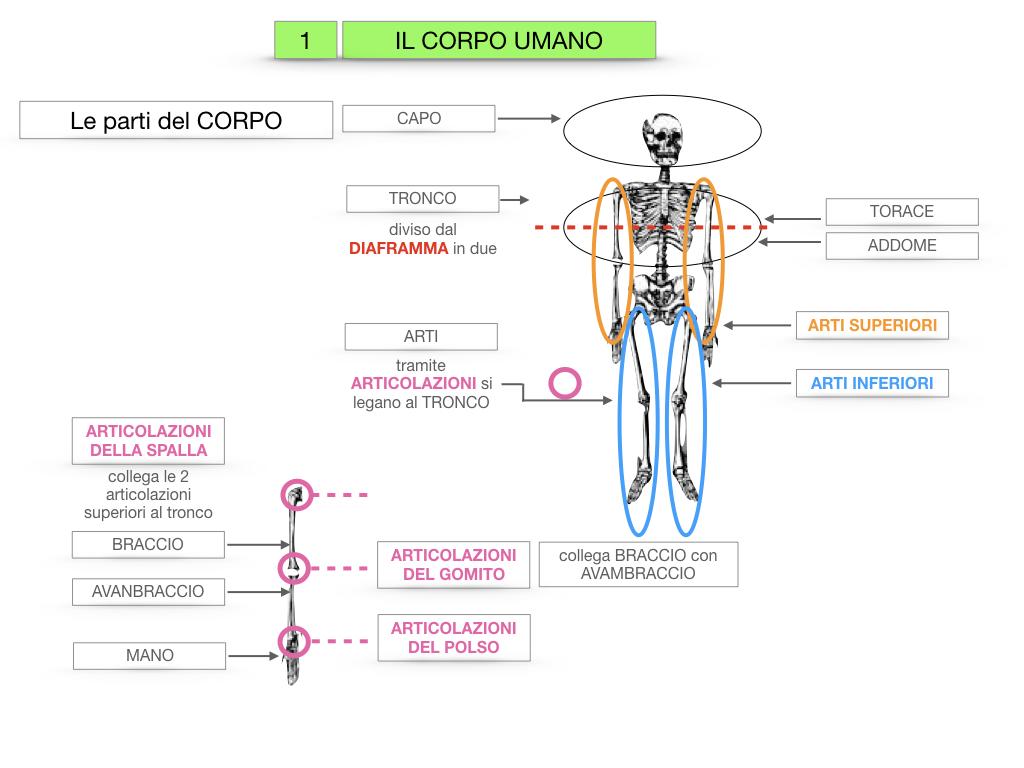 1.SCIENZE_IL CORPO UMANO_SIMULAZIONE.020
