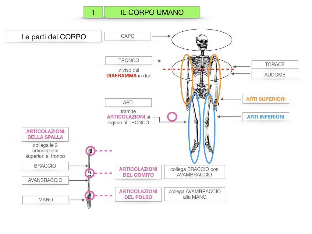 1.SCIENZE_IL CORPO UMANO_SIMULAZIONE.021