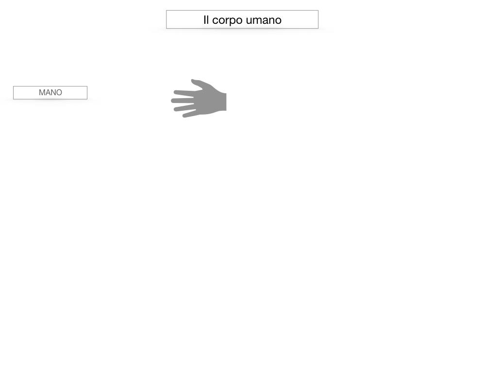 1.SCIENZE_IL CORPO UMANO_SIMULAZIONE.022