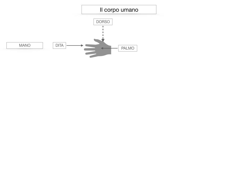 1.SCIENZE_IL CORPO UMANO_SIMULAZIONE.025