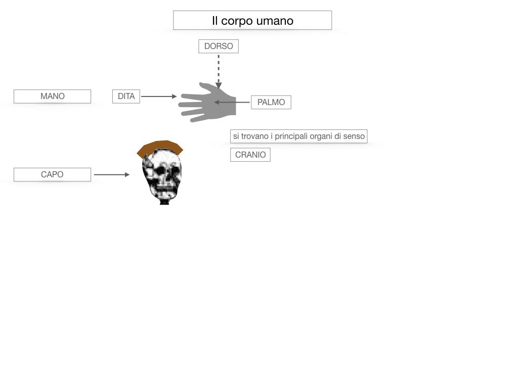 1.SCIENZE_IL CORPO UMANO_SIMULAZIONE.027
