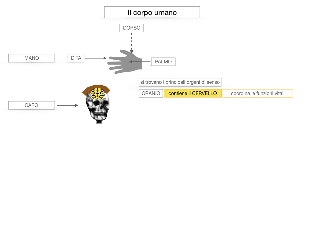1.SCIENZE_IL CORPO UMANO_SIMULAZIONE.028