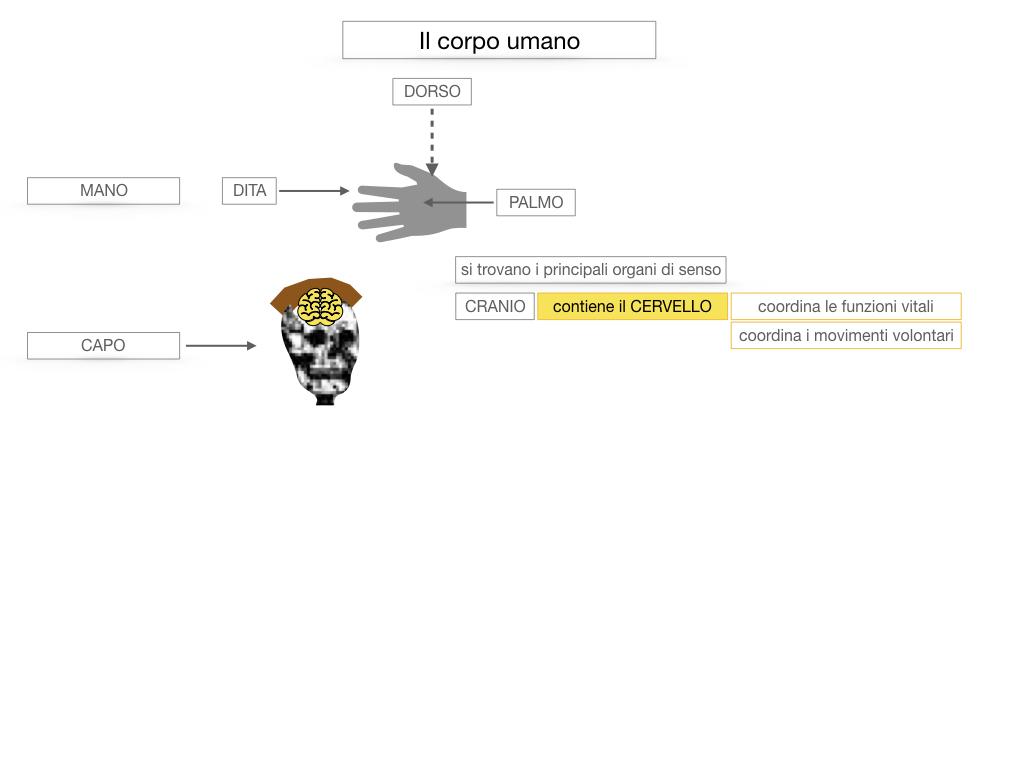 1.SCIENZE_IL CORPO UMANO_SIMULAZIONE.029