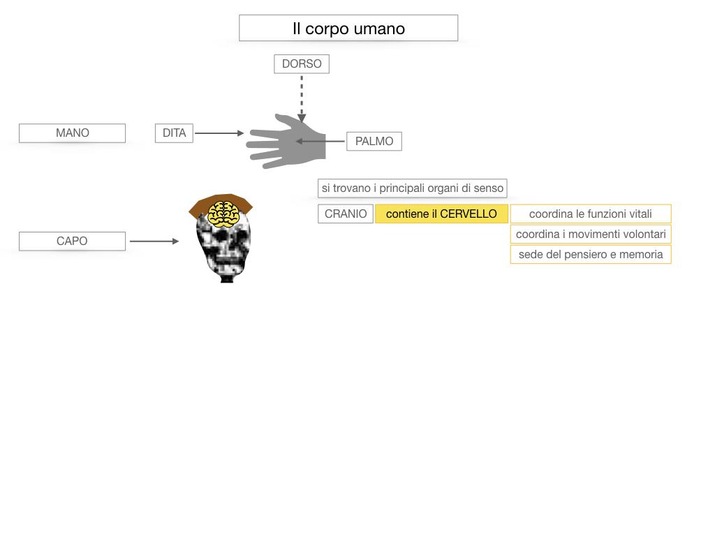1.SCIENZE_IL CORPO UMANO_SIMULAZIONE.030