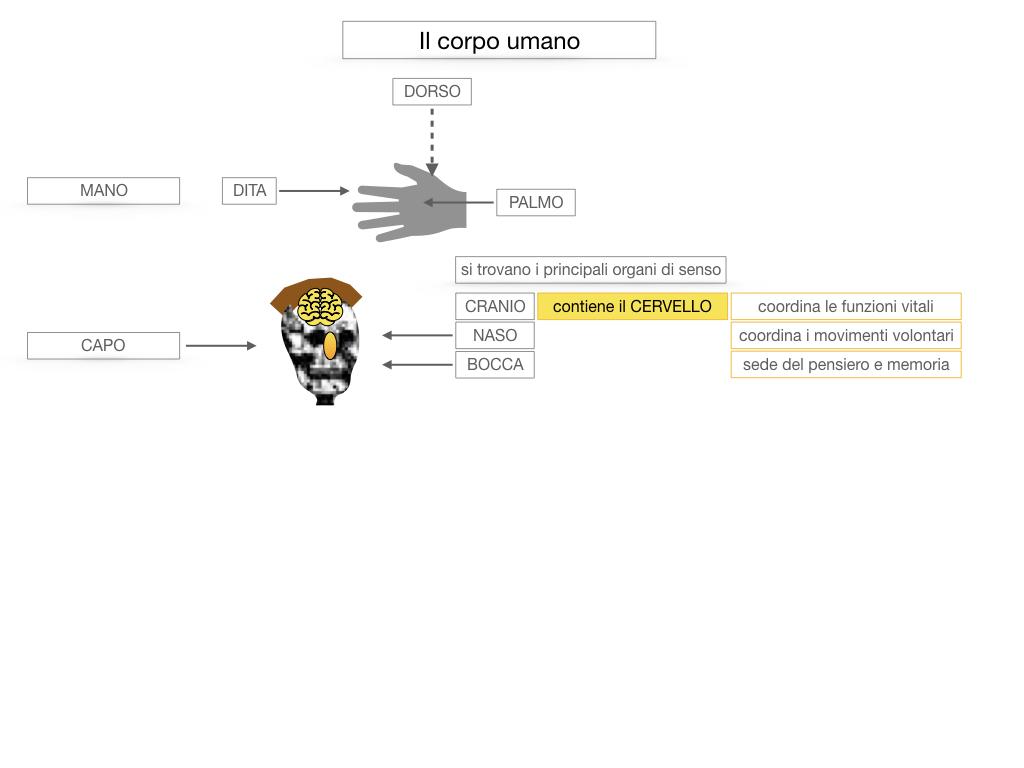 1.SCIENZE_IL CORPO UMANO_SIMULAZIONE.031