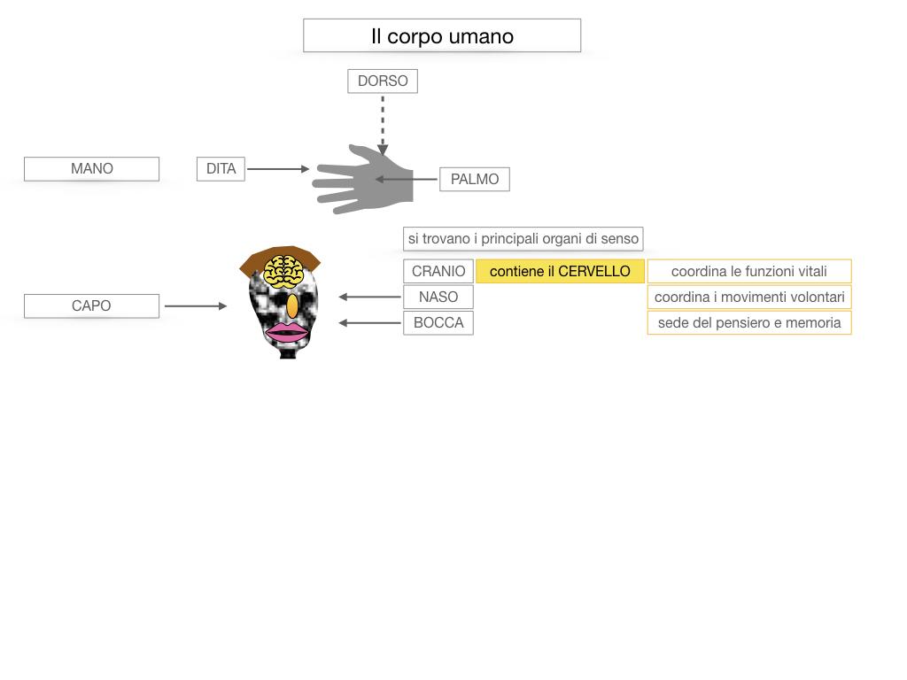 1.SCIENZE_IL CORPO UMANO_SIMULAZIONE.032