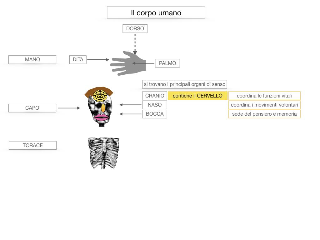 1.SCIENZE_IL CORPO UMANO_SIMULAZIONE.033