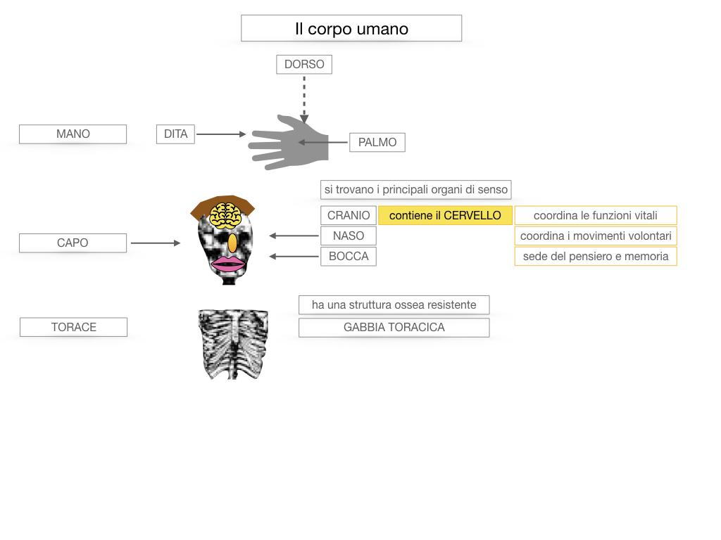 1.SCIENZE_IL CORPO UMANO_SIMULAZIONE.034