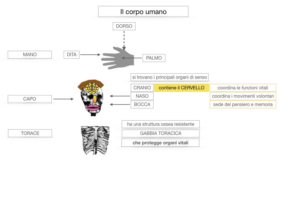 1.SCIENZE_IL CORPO UMANO_SIMULAZIONE.035
