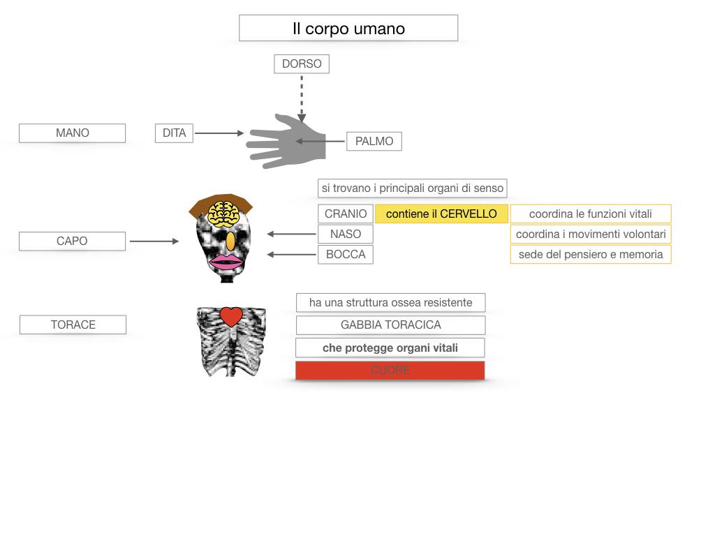 1.SCIENZE_IL CORPO UMANO_SIMULAZIONE.036