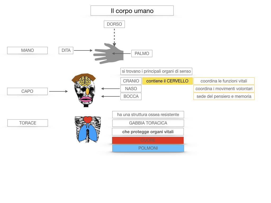 1.SCIENZE_IL CORPO UMANO_SIMULAZIONE.037