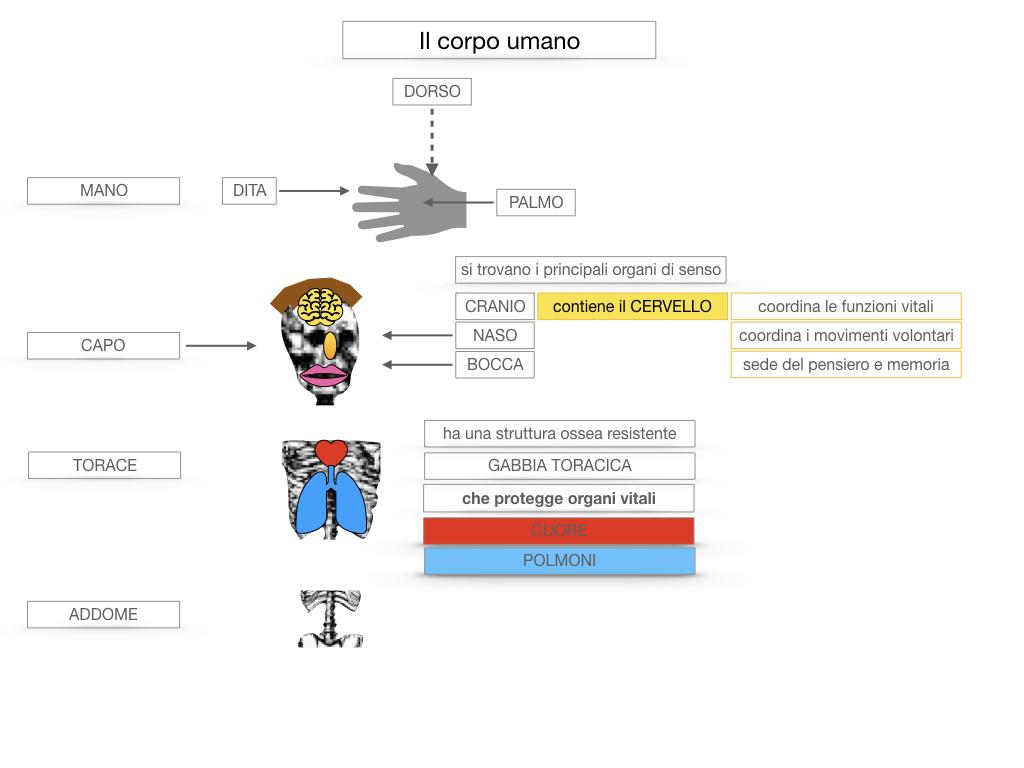 1.SCIENZE_IL CORPO UMANO_SIMULAZIONE.038