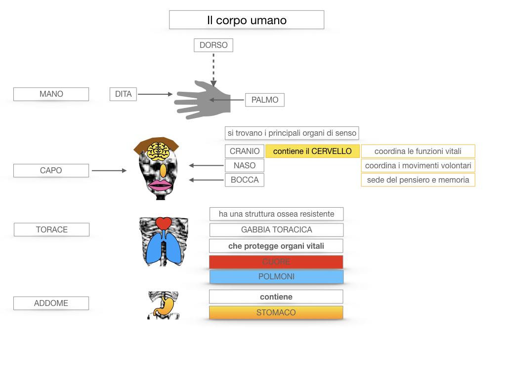 1.SCIENZE_IL CORPO UMANO_SIMULAZIONE.040