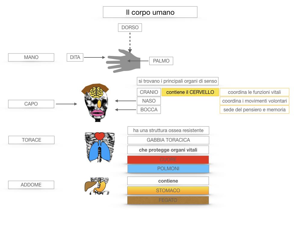 1.SCIENZE_IL CORPO UMANO_SIMULAZIONE.041