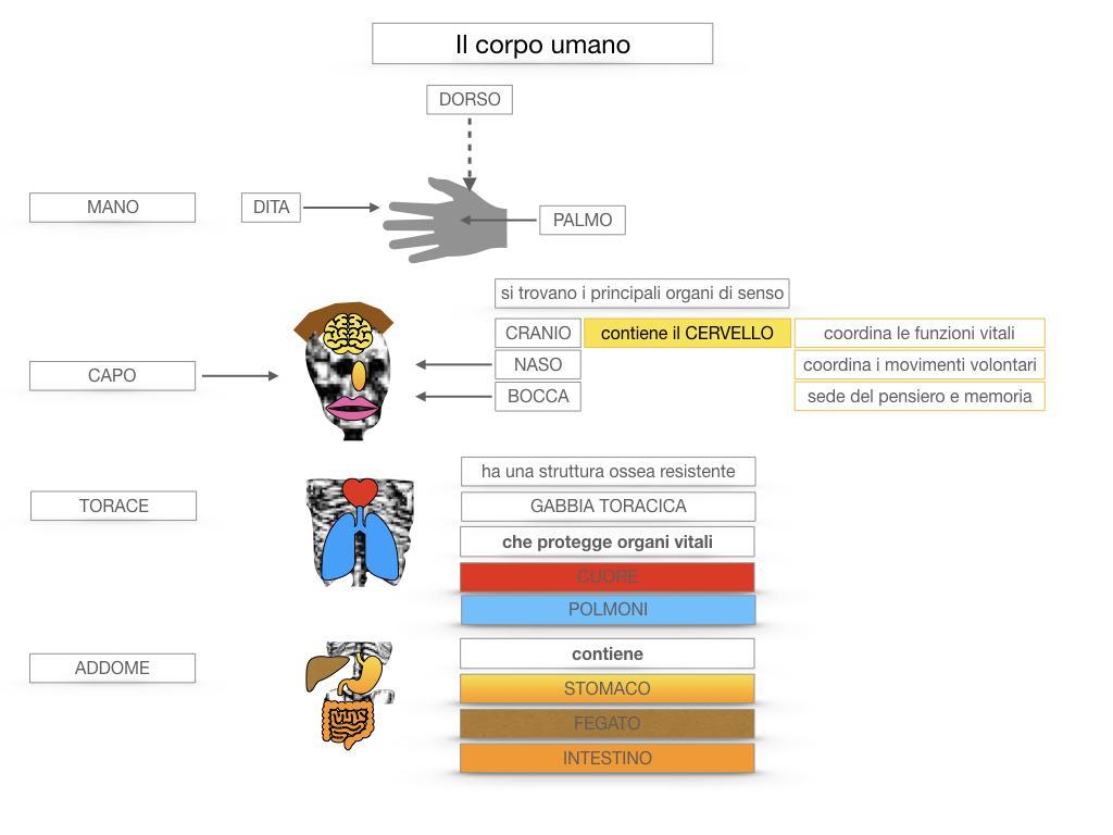 1.SCIENZE_IL CORPO UMANO_SIMULAZIONE.042