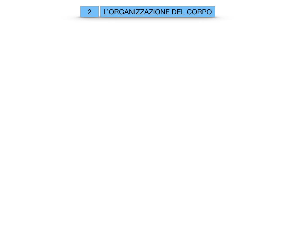 1.SCIENZE_IL CORPO UMANO_SIMULAZIONE.057