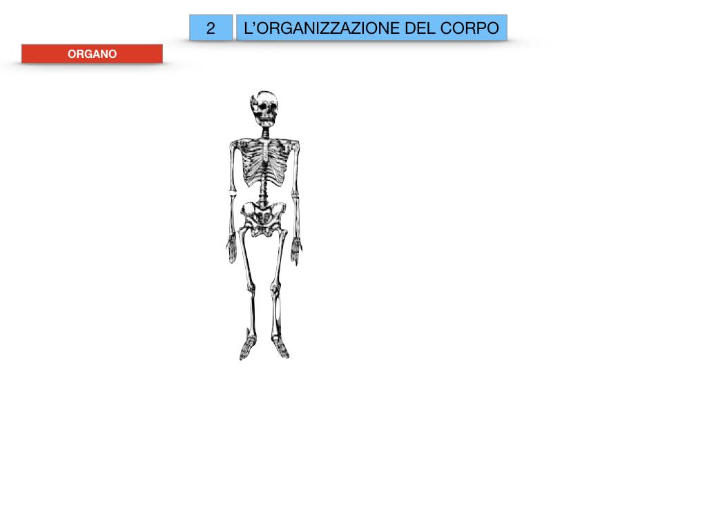 1.SCIENZE_IL CORPO UMANO_SIMULAZIONE.058