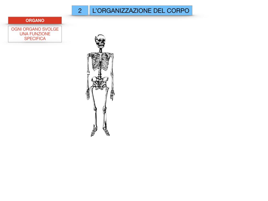1.SCIENZE_IL CORPO UMANO_SIMULAZIONE.059