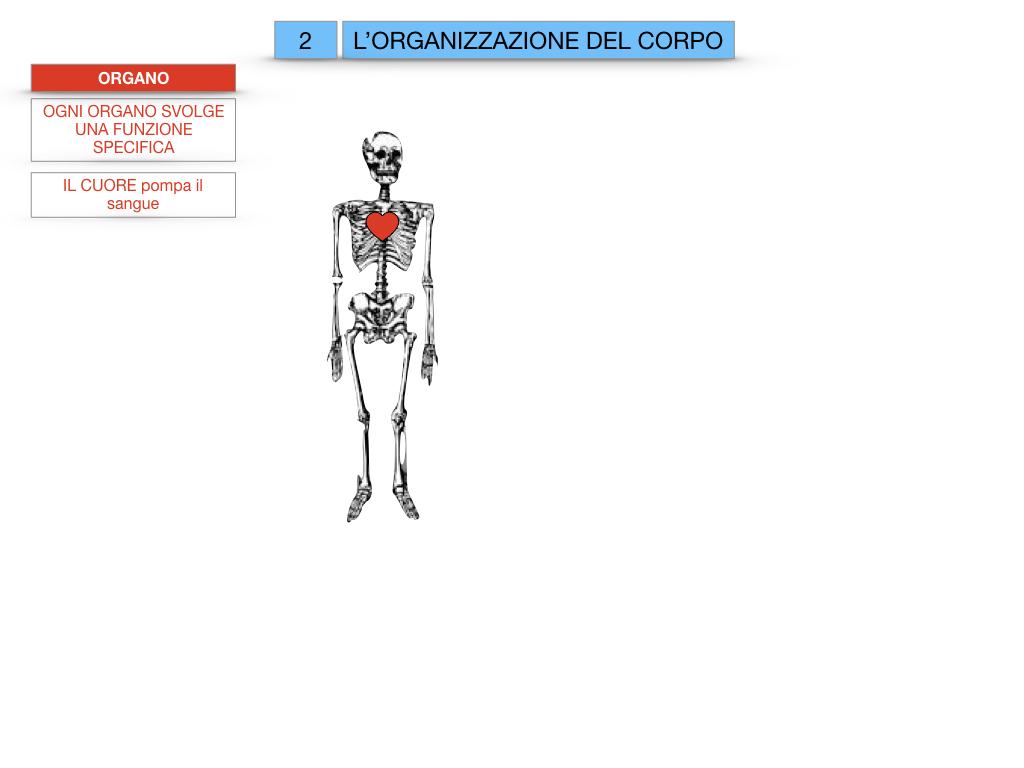 1.SCIENZE_IL CORPO UMANO_SIMULAZIONE.060