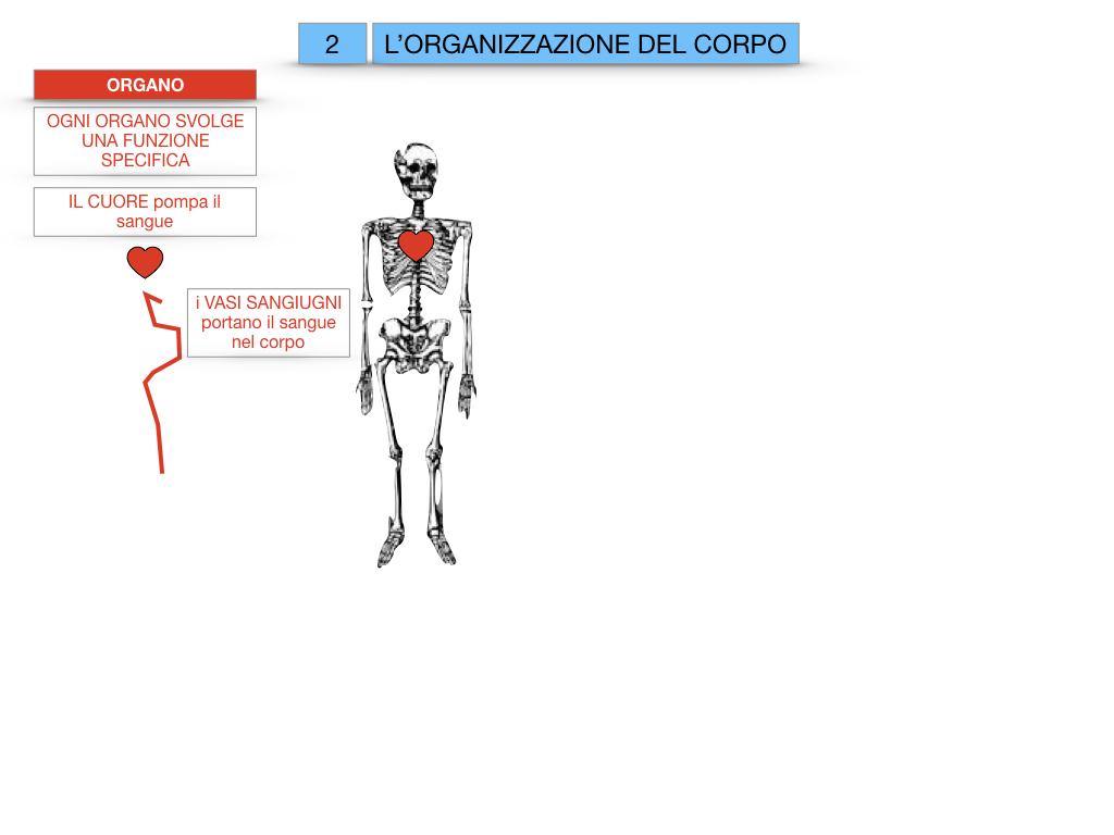1.SCIENZE_IL CORPO UMANO_SIMULAZIONE.061