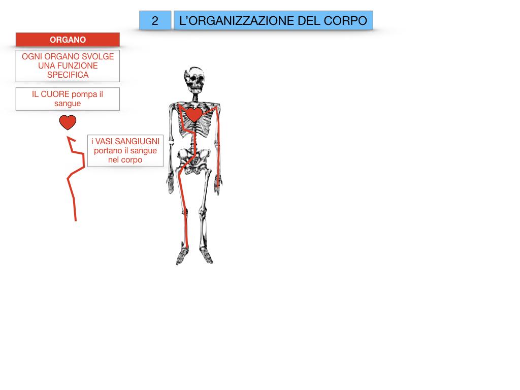 1.SCIENZE_IL CORPO UMANO_SIMULAZIONE.062