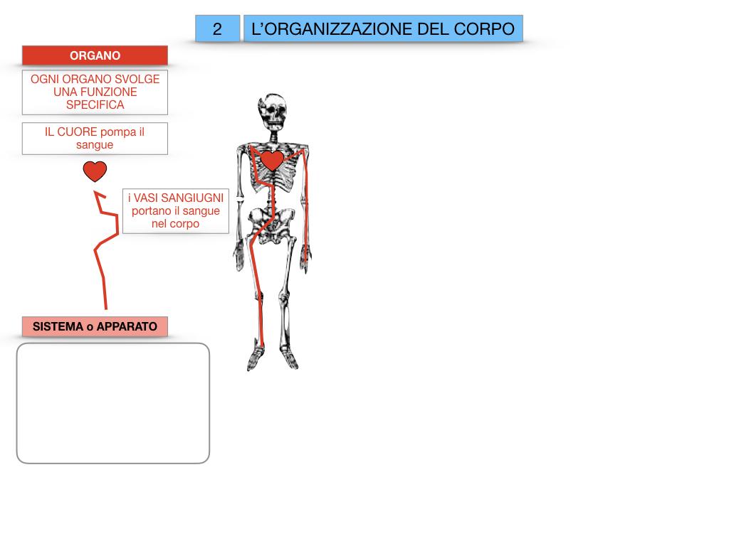 1.SCIENZE_IL CORPO UMANO_SIMULAZIONE.063