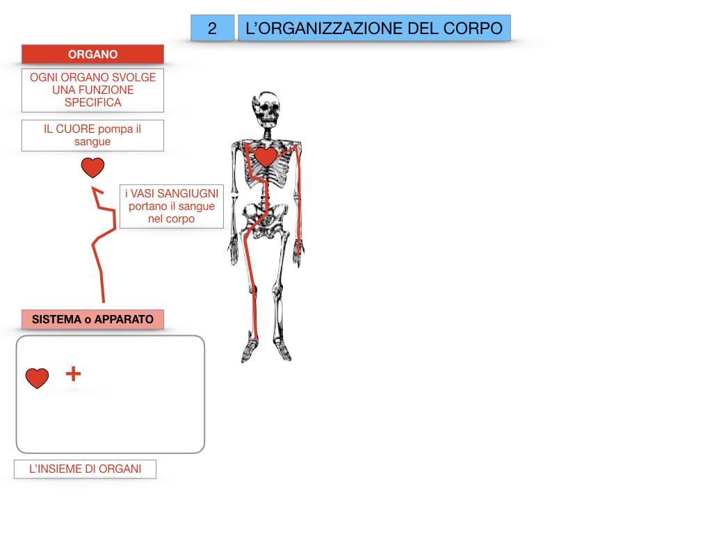 1.SCIENZE_IL CORPO UMANO_SIMULAZIONE.064