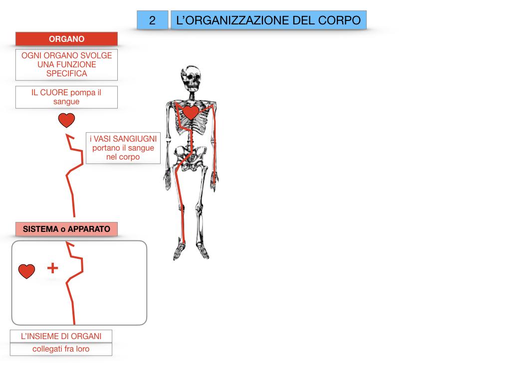 1.SCIENZE_IL CORPO UMANO_SIMULAZIONE.065