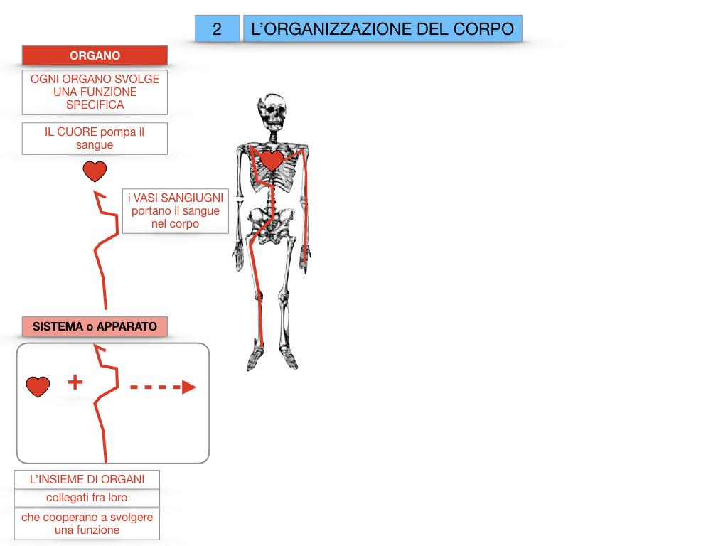 1.SCIENZE_IL CORPO UMANO_SIMULAZIONE.066