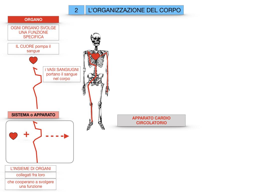 1.SCIENZE_IL CORPO UMANO_SIMULAZIONE.067