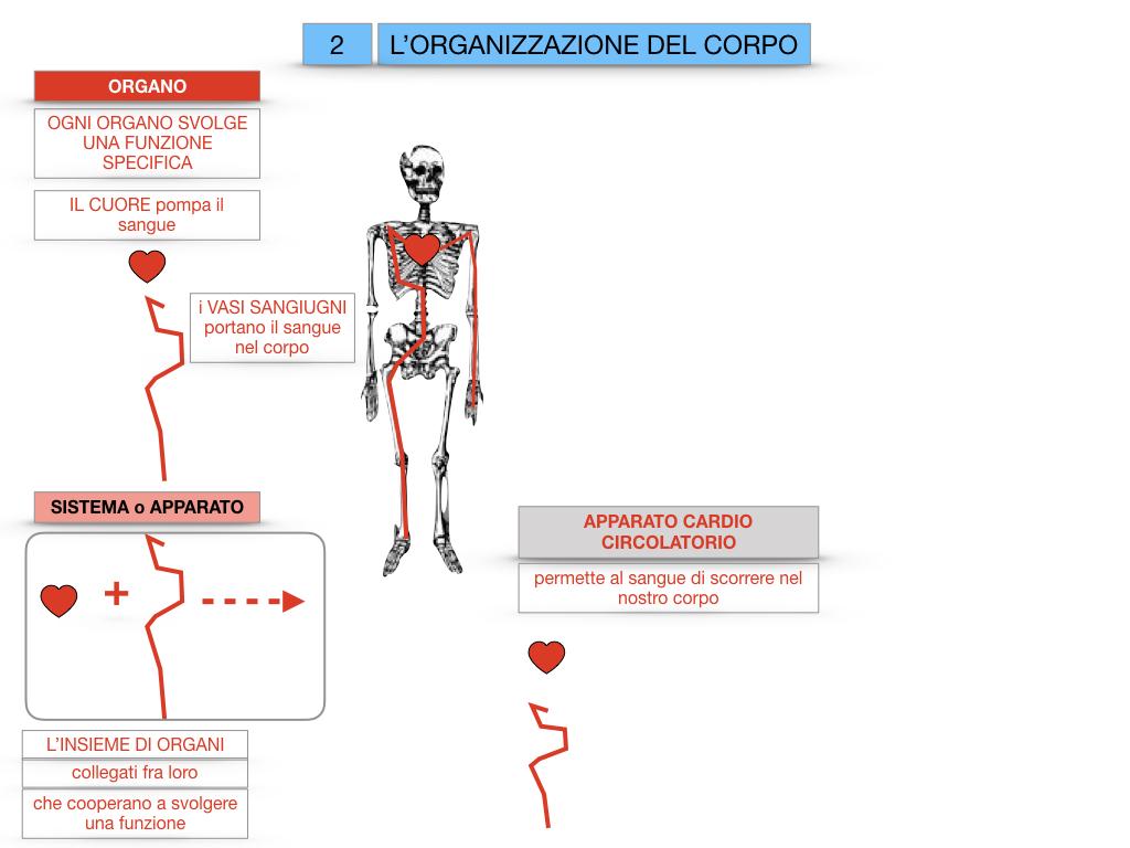 1.SCIENZE_IL CORPO UMANO_SIMULAZIONE.068