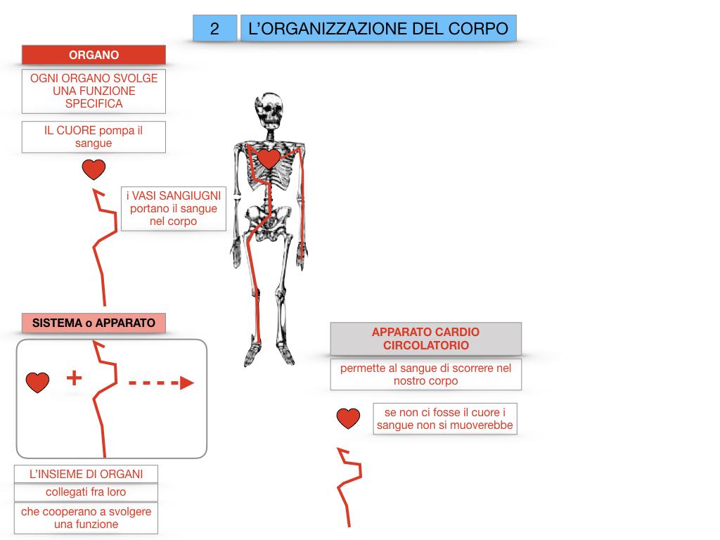 1.SCIENZE_IL CORPO UMANO_SIMULAZIONE.069